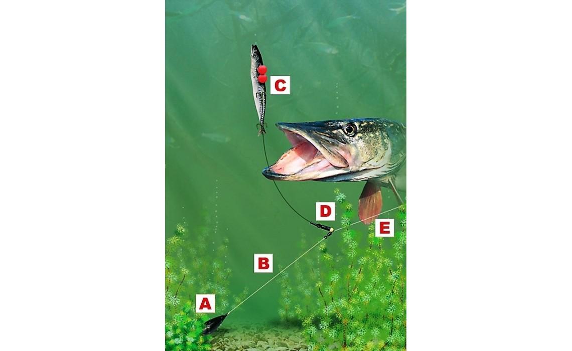 Deadbait pike fishing